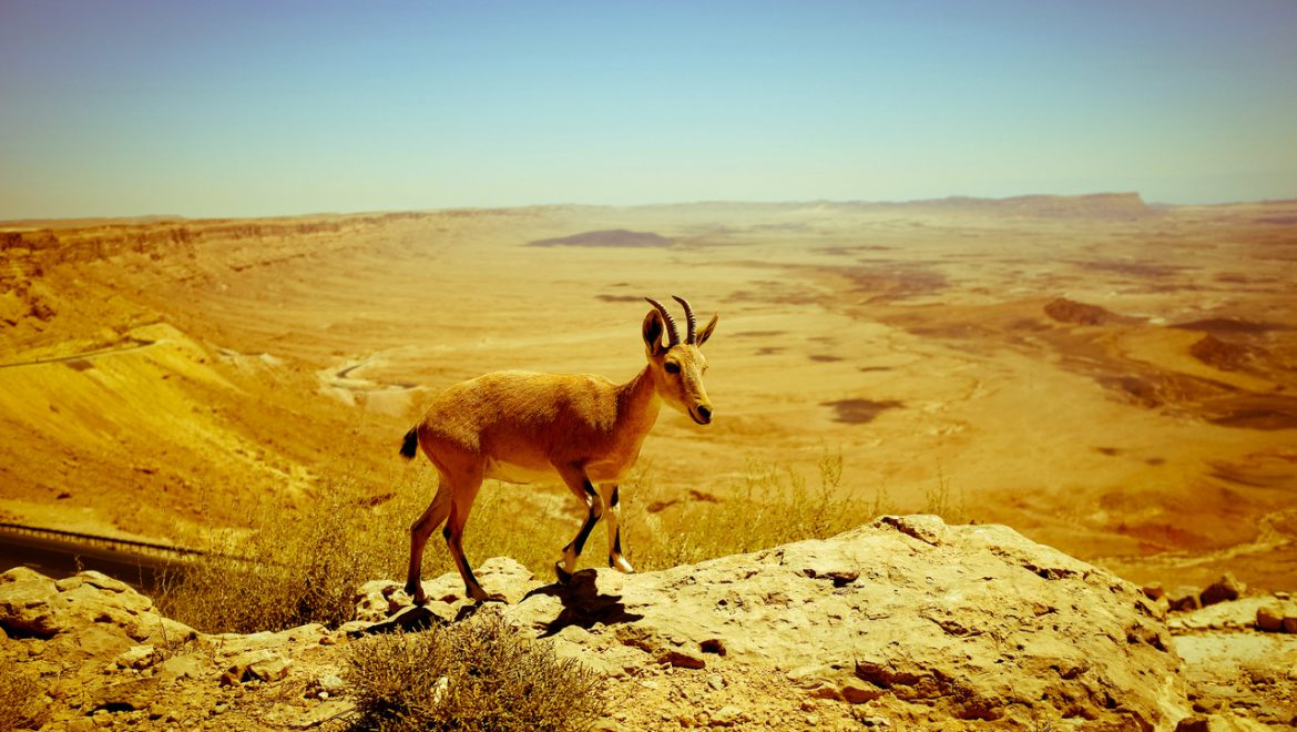 Top 10 Things To Do In The Negev Desert